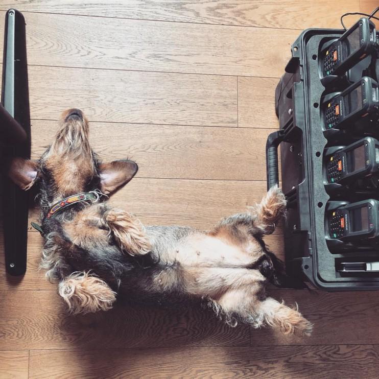 Hund, liegend, süß